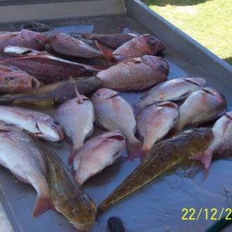snapper_fishing_20111223_1005776075